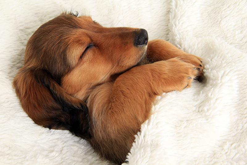 Doggie Sleepover